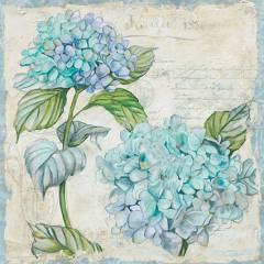 Голубые Гортензии 1