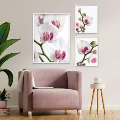 Подборка постеров Орхидеи